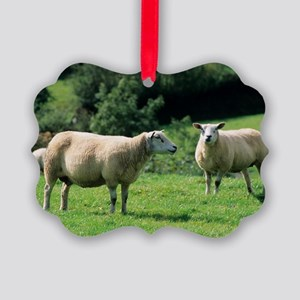 Texel sheep Picture Ornament
