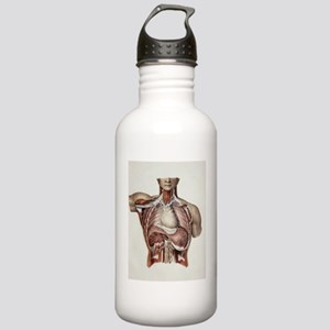 Thoracic nerves, 1844  Stainless Water Bottle 1.0L