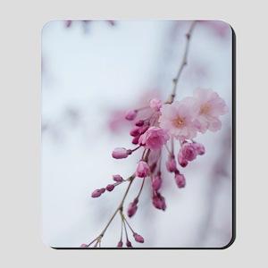 Prunus subhirtella 'Pendula' Mousepad
