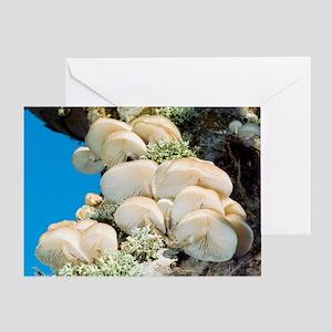 Porcelain fungus Greeting Card