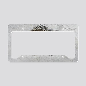 Prehistoric perch fossil License Plate Holder