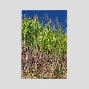Sugar cane Rectangle Magnet