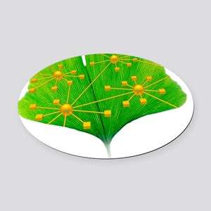 Ginkgo and network diagram Oval Car Magnet