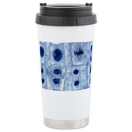 Plant cell mitosis, light micro Stainless Steel Tr