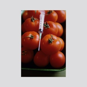 Genetically modified tomatoes Rectangle Magnet