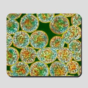 Stem cells, light micrograph Mousepad