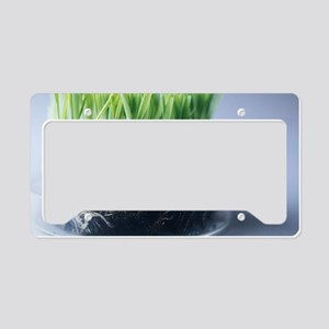 Genetically modified grass License Plate Holder
