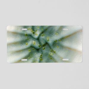 Penicillium fungus growing  Aluminum License Plate