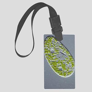 Paramecium protozoan,light micro Large Luggage Tag