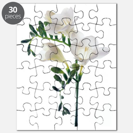 Freesia (Freesia sp) Puzzle