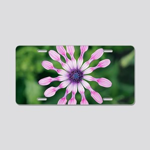 Osteospermum sp Aluminum License Plate