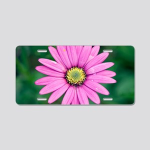 Osteospermum 'Star of the V Aluminum License Plate