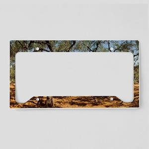 Olive Grove, Zante, Greece License Plate Holder