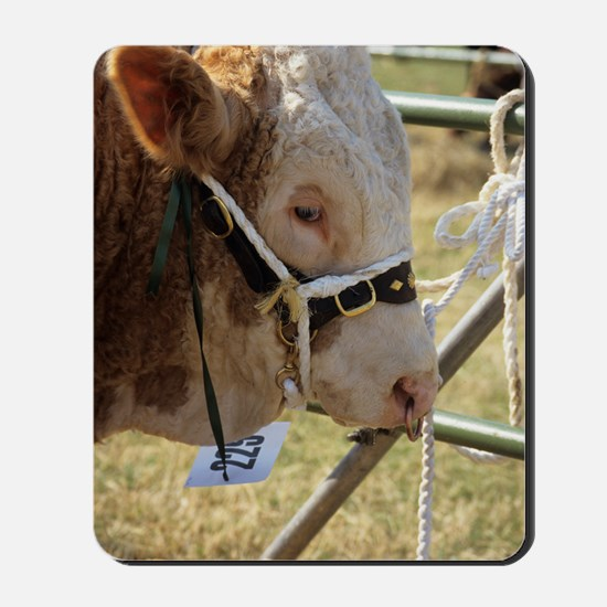 Simmental bull Mousepad