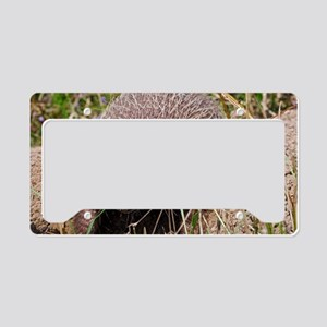 Six-banded armadillo License Plate Holder