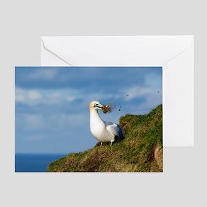 Northern gannet Greeting Card