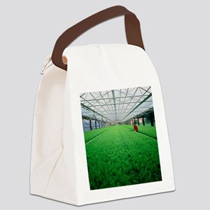 Silviculture: inspection of tree  Canvas Lunch Bag