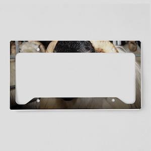 Scottish blackface ram License Plate Holder