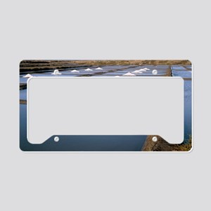 Salt pans License Plate Holder