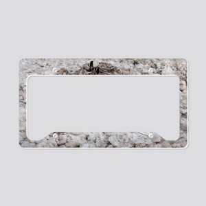 Salt encrusted plant License Plate Holder