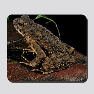 River toad Mousepad