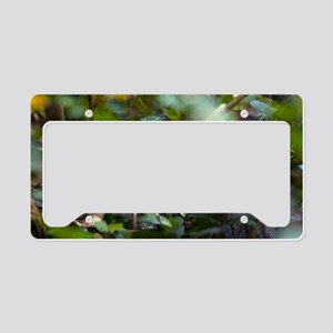 Ring-tailed lemur in a tree License Plate Holder
