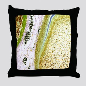 Developing tooth, light micrograph Throw Pillow