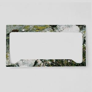 Quartzite rocks License Plate Holder