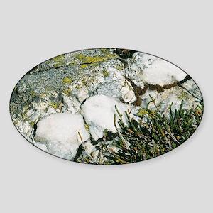 Quartzite rocks Sticker (Oval)
