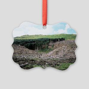 Deforested conifer plantation Picture Ornament