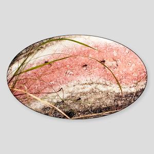 Quartzite metamorphic rock Sticker (Oval)