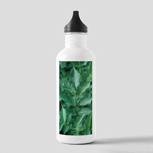 Potato foliage (Solanu Stainless Water Bottle 1.0L