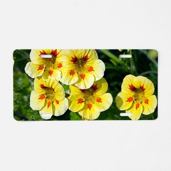 Nasturtium (Tropaeolum sp.) Aluminum License Plate
