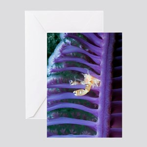 Porcelain crab on a sea pen Greeting Card