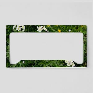 Narcissus-flowered Anemone License Plate Holder