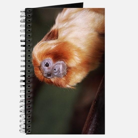 Golden Lion Tamarin Journal