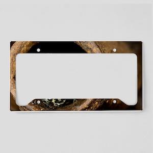 Poison arrow frog License Plate Holder