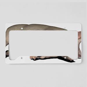 Pig anatomy, artwork License Plate Holder