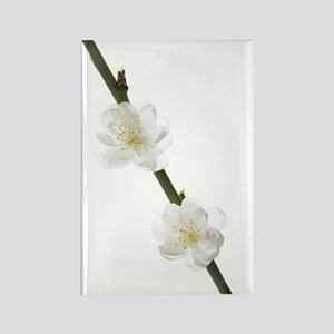 Cherry blossom (Prunus sp.) Rectangle Magnet