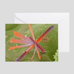 Pesticide contamination, SEM Greeting Card