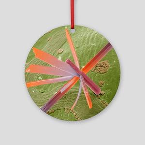 Pesticide contamination, SEM Round Ornament