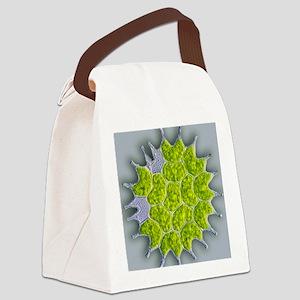 Pediastrum green algae, light mic Canvas Lunch Bag