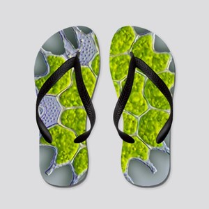Pediastrum green algae, light micrograp Flip Flops