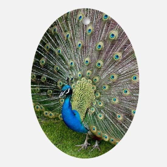 Peacock Oval Ornament