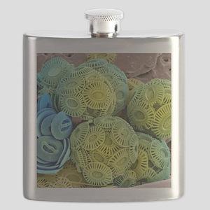Calcareous phytoplankton, SEM Flask