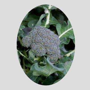 Broccoli Oval Ornament