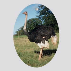 Ostrich Oval Ornament