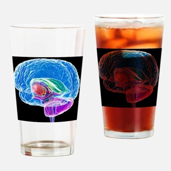 Brain anatomy, artwork Drinking Glass
