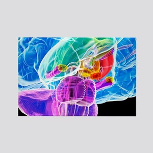 Brain anatomy, artwork Rectangle Magnet