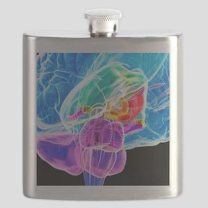 Brain anatomy, artwork Flask